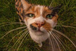 """Уильям Вуд сделал это фото своей кошки 14 миллиметровым объективом """"рыбий глаз"""". Получилось забавно! William Wood https://www.flickr.com/photos/129810757@N05/albums/with/72157651277893969"""