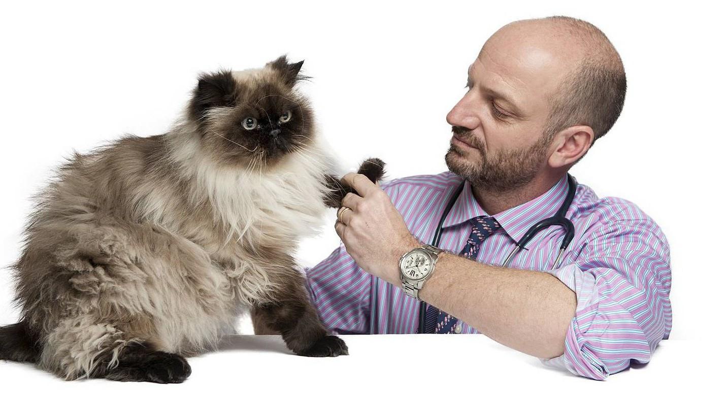 Как выбрать ветеринарную клинику? (полезная информация )
