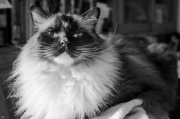 """Петра Вендт из Германии очень любит фотографировать кошек. Этого великолепного красавца с восхитительными усами зовут Эмиль, а фото называется """" сидя на гладильной доске Смайлик «wink»"""""""