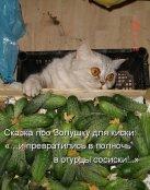 1400238385_kotomatritsy_24