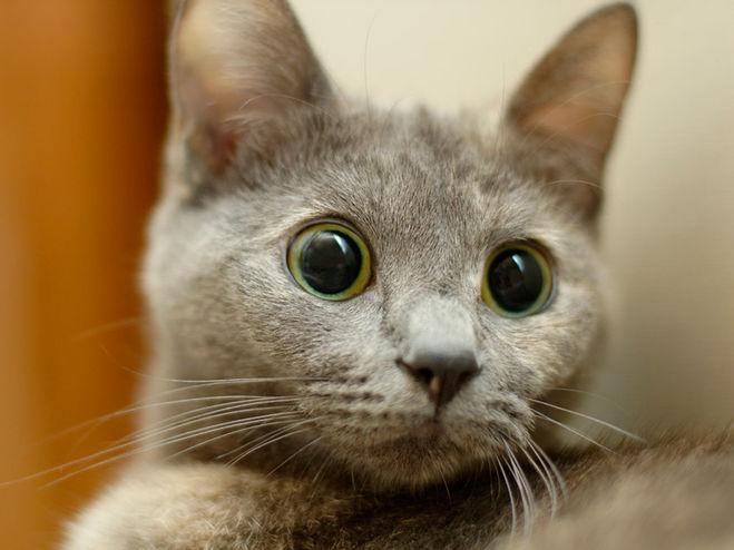 Если ваша кошка так делает - бейте тревогу!