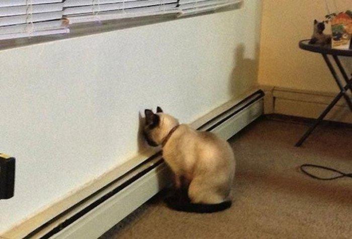 Картинки по запросу Коты, которые и не подозревают, что их заметили