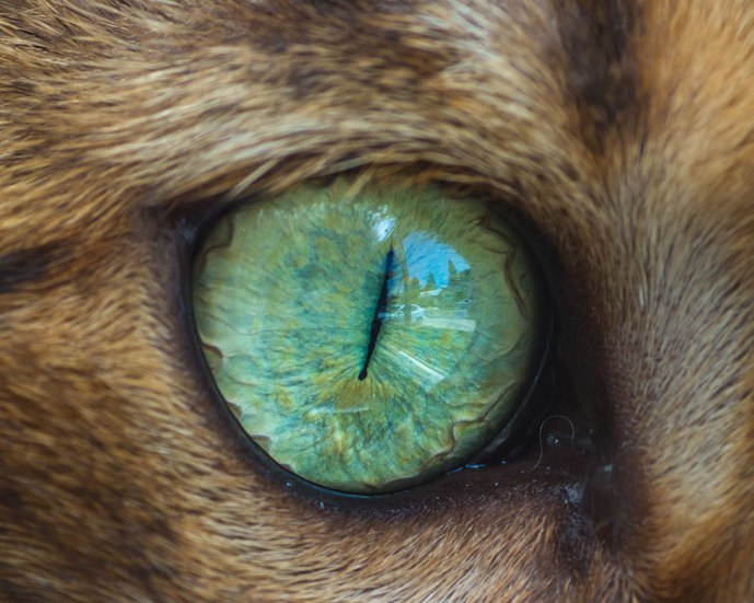 15-Macro-Shots-of-Cat-Eyes11__880
