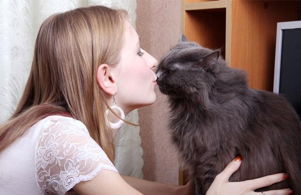 любимая кошка 25