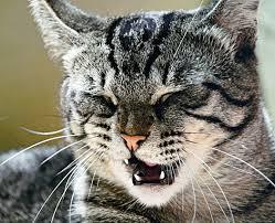 кошка чихает_01