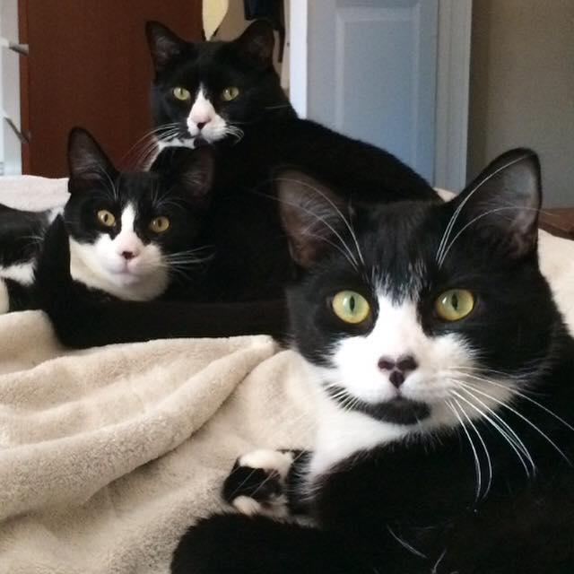 троим красавицам вылизывают