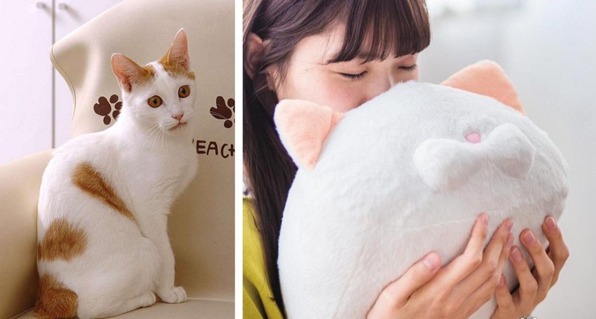 Запах кошки