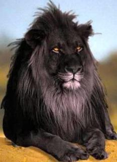 Чёрный король