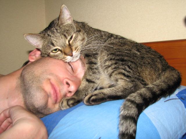 кот спит в кровати