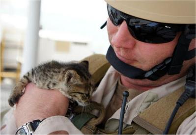 котята и моряки 2