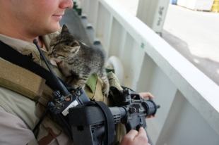 котята и моряки 3
