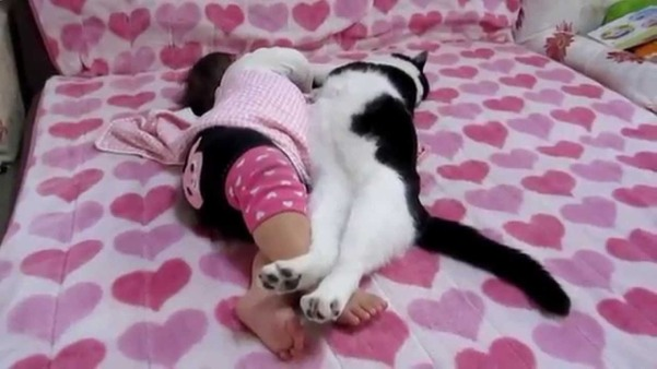 кошка спит в кровати 5