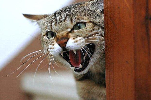 страх у кошки 2