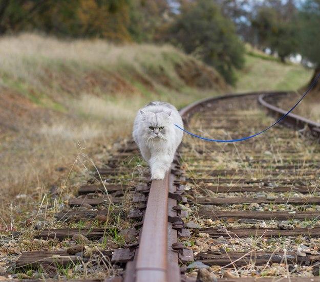 gandalf-cat-travelling-the-world-12