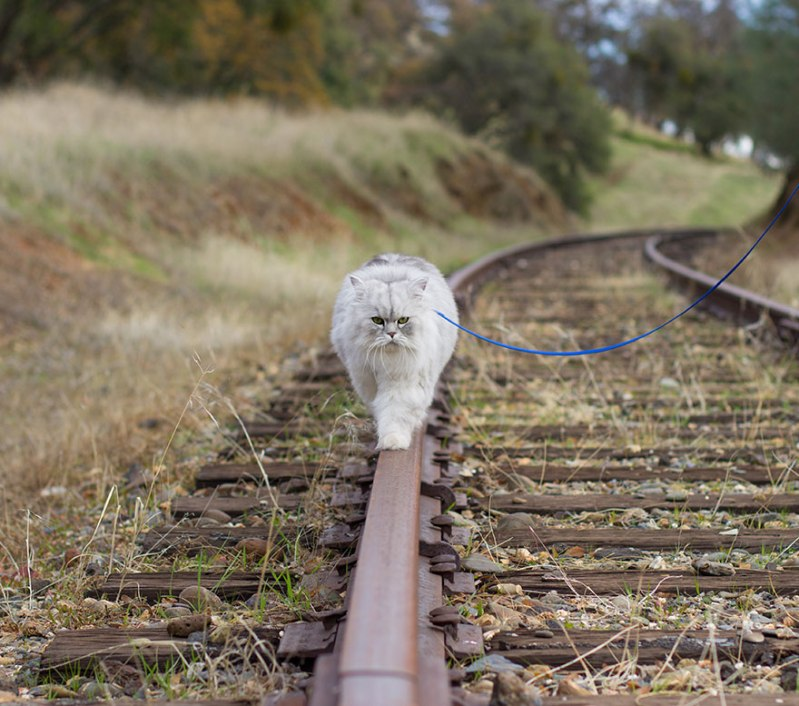 gandalf-cat-travelling-the-world-12