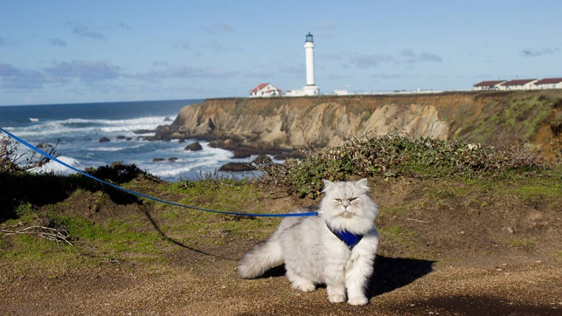 gandalf-cat-travelling-the-world-13