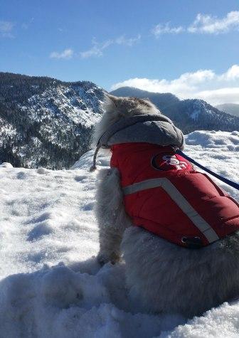 gandalf-cat-travelling-the-world-19