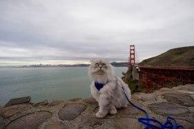gandalf-cat-travelling-the-world-20