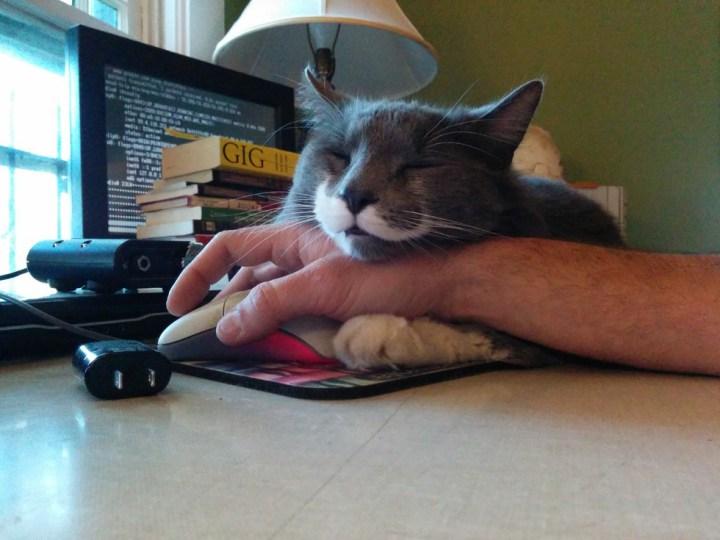 кот мешает работать