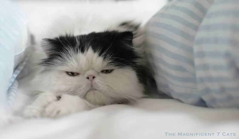 Норманмперед сном