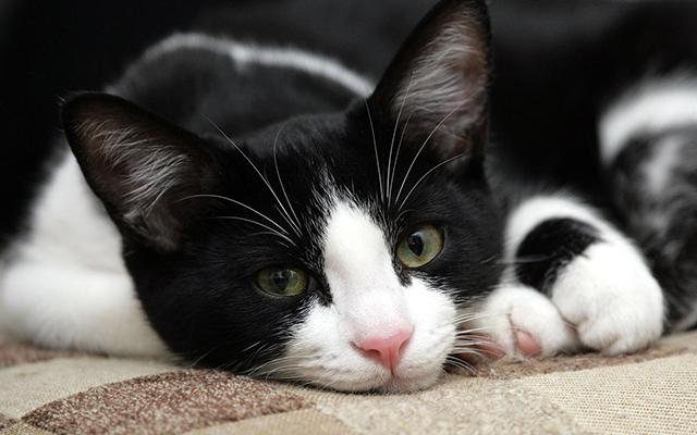 kindness_cats