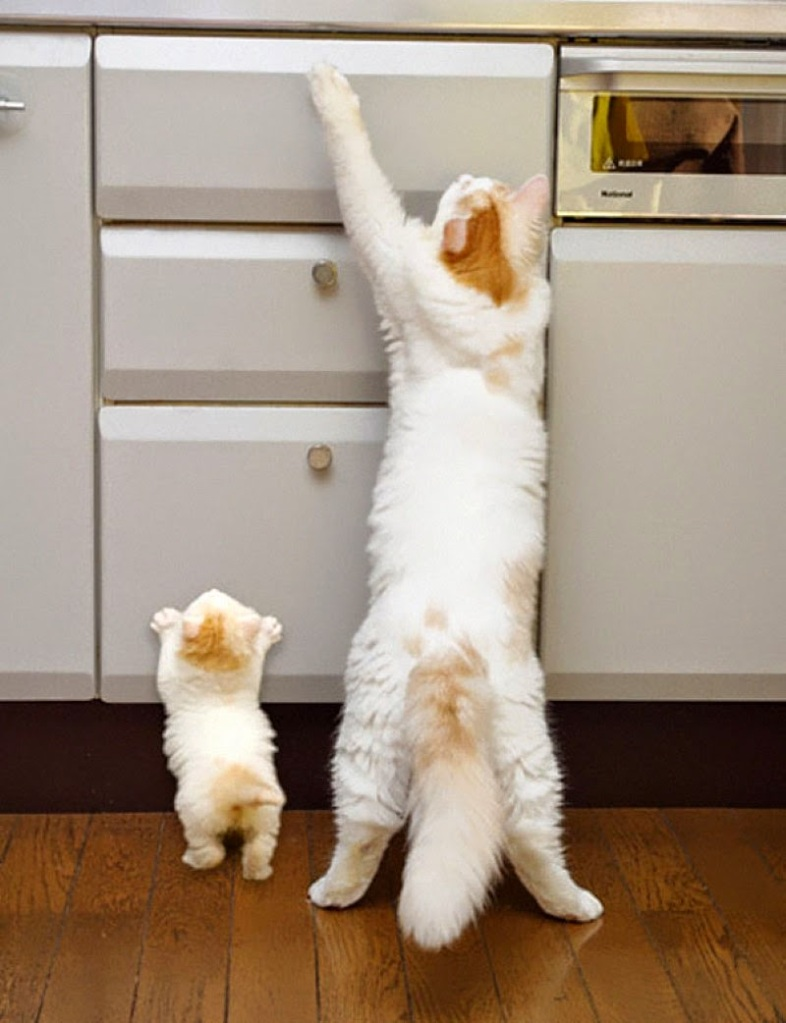 9_ Two stretching cats that are sure to steal your heart_ - 30 Animals With Their Adorable Mini-Me Counterparts
