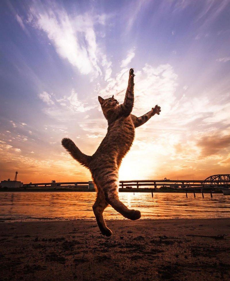 jumping-cats-03